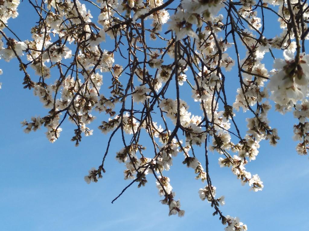 Floració febrer 17.2-min